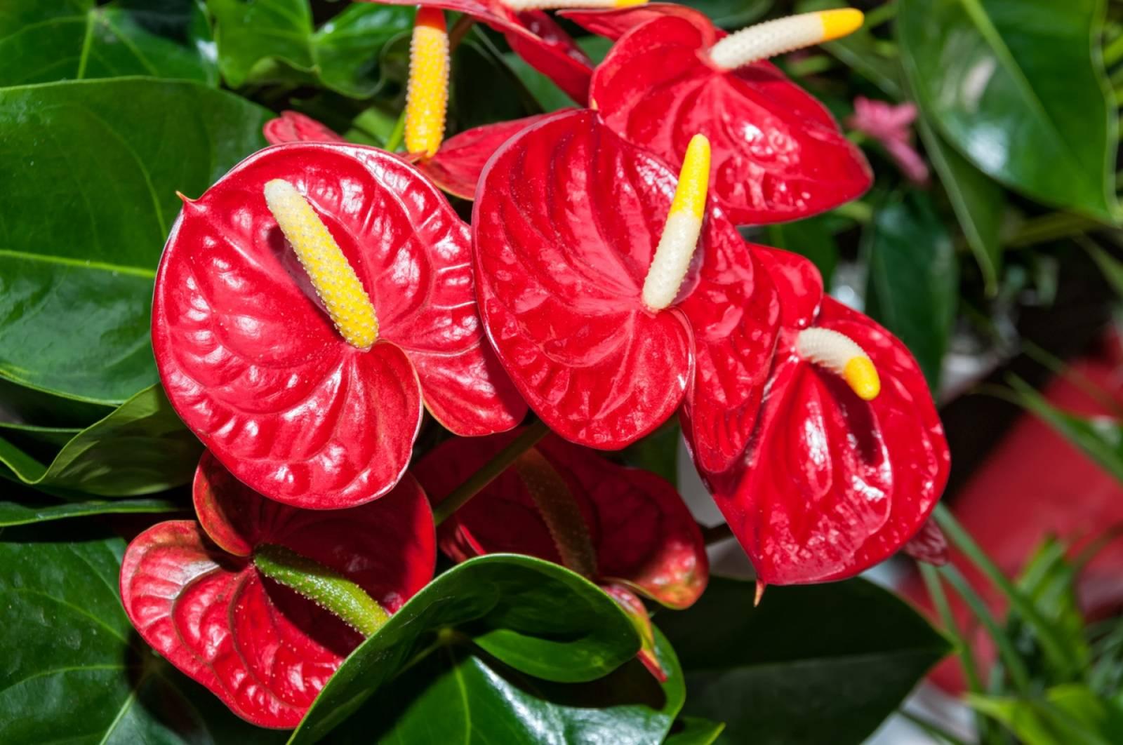Petites Plantes Fleuries En Pot plantes fleuries - magasin de plantes et arbres sur